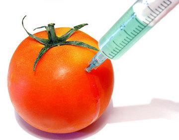 GMO picture