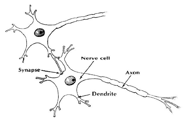 Synapse DIXDC1
