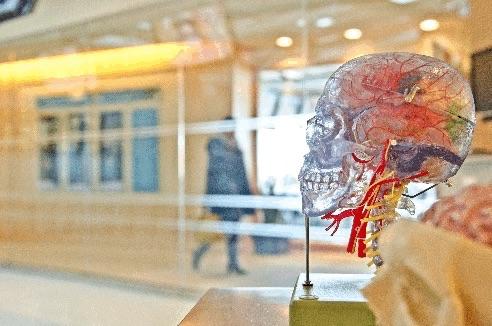 autistic neurons brain